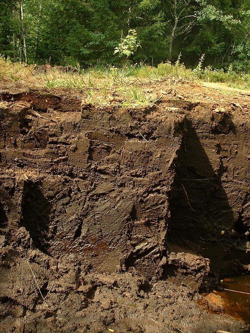 soil.jpeg